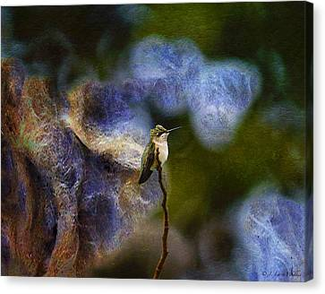 Hummingbird In The Cosmos Canvas Print by J Larry Walker