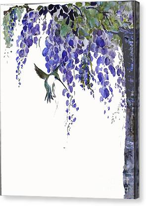 Hummingbird In Wisteria  Canvas Print by Sibby S