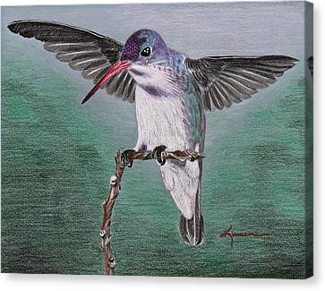 Canvas Print featuring the drawing Hummingbird by Kume Bryant