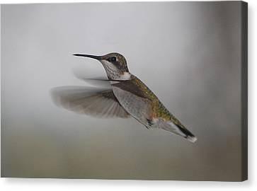 Canvas Print featuring the photograph Hummingbird  by Leticia Latocki