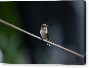 Hummingbird On A Wire Canvas Print by Gary Wightman