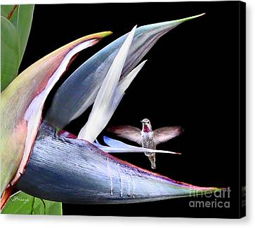 Canvas Print featuring the photograph Hummingbird Paradise by Jennie Breeze