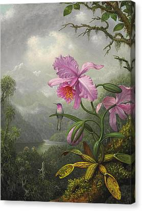 Humming Birds Canvas Print - Hummingbird Perched On The Orchid Plant by Martin Johnson Heade