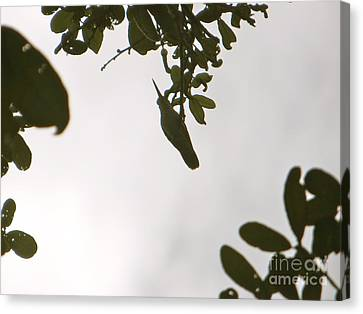 Canvas Print featuring the photograph Hummingbird Silhouette 1 by Joy Hardee