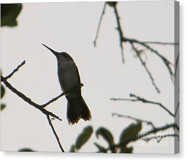 Canvas Print featuring the photograph Hummingbird Silhouette 2 by Joy Hardee