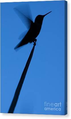 Hummingbird Silhouette Canvas Print