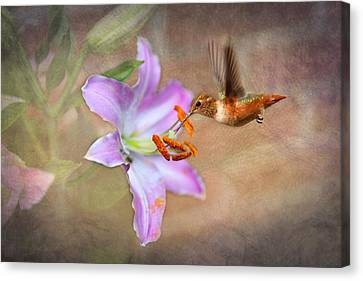 Hummingbird Sweets Canvas Print by Mary Timman