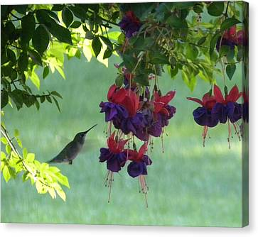 Canvas Print featuring the photograph Hummingbird by Teresa Schomig