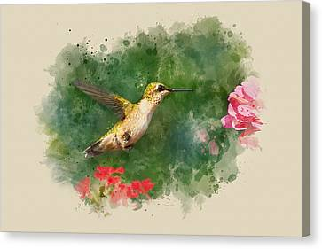 Hummingbird - Watercolor Art Canvas Print by Christina Rollo