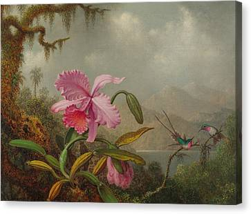 Hummingbirds And Orchids Canvas Print by Martin Johnson Heade