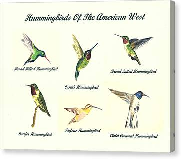 Hummingbirds Of The American West Canvas Print by Michael Vigliotti