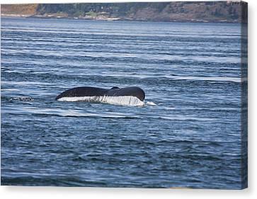 Humpback Whale - 0002 Canvas Print