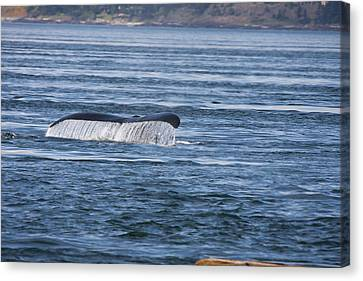 Humpback Whale - 0003 Canvas Print