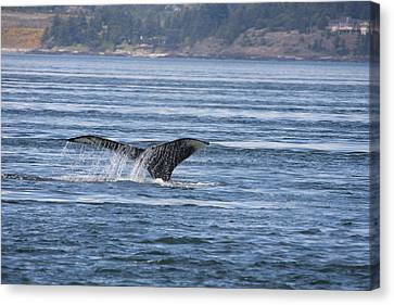Humpback Whale - 0006 Canvas Print