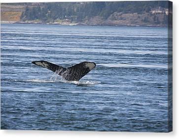 Humpback Whale - 0007 Canvas Print