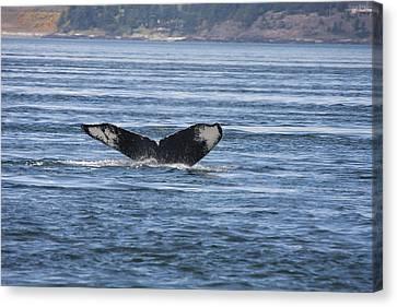 Humpback Whale - 0008 Canvas Print