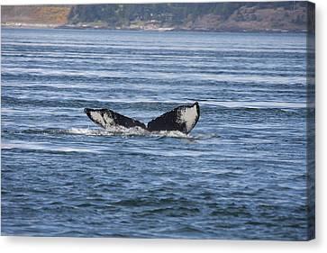 Humpback Whale - 0009 Canvas Print