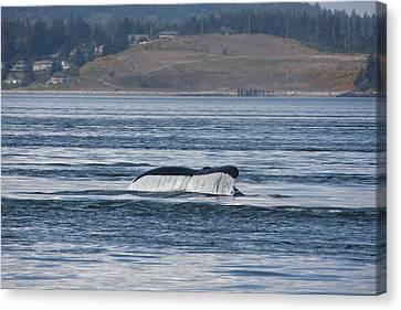 Humpback Whale - 0010 Canvas Print