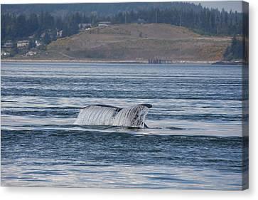 Humpback Whale - 0011 Canvas Print
