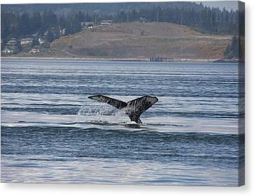 Humpback Whale - 0013 Canvas Print