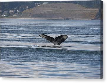 Humpback Whale - 0014 Canvas Print