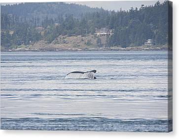 Humpback Whale - 0015 Canvas Print