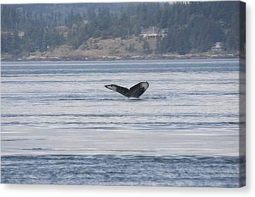Humpback Whale - 0016 Canvas Print