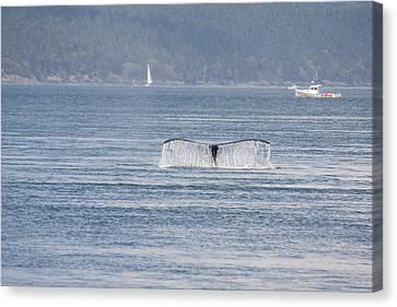 Humpback Whale - 0017 Canvas Print