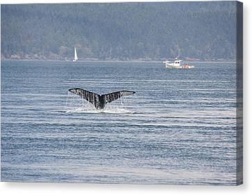 Humpback Whale - 0018 Canvas Print