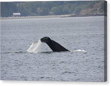 Humpback Whale - 0019 Canvas Print