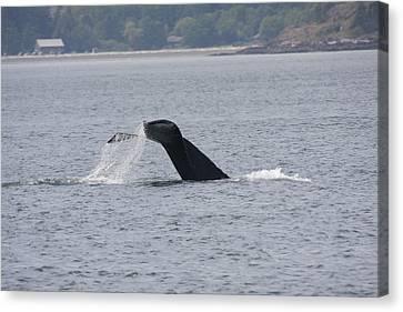 Humpback Whale - 0020 Canvas Print