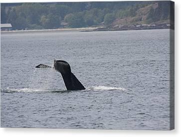 Humpback Whale - 0021 Canvas Print