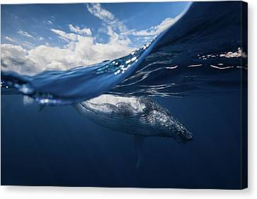 Humpback Whale And The Sky Canvas Print by Barathieu Gabriel