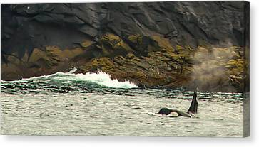 Humpback Whale Canvas Print by Debra  Miller