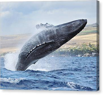 Humpback Whale Canvas Print by M Swiet Productions