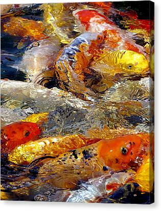 Hungry Koi Canvas Print
