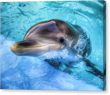 Canvas Print featuring the photograph Hungry Dolphin by Tim Stanley