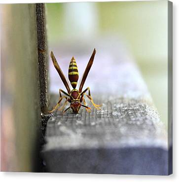 Hungry Hornet Canvas Print by Candice Trimble