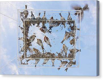 Hungry Little Birds Canvas Print by Tim Grams
