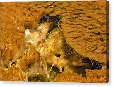 Hungry Looking Bacterial Mat Yellowstone Canvas Print by Bruce Gourley