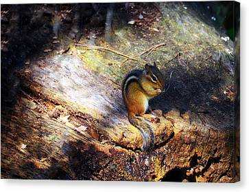 Hungry Canvas Print by Mark Papke