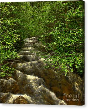 Canvas Print featuring the photograph Hunt Creek Foilage by Sam Rosen