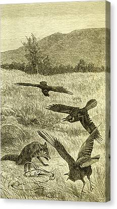 Hunt Fox Austria 1891 Canvas Print by Austrian School