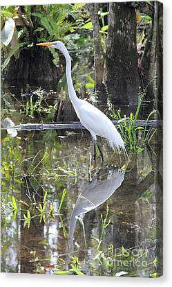 Mangrove Forest Canvas Print - Hunter by Carey Chen