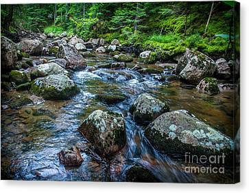 Hunters Brook Canvas Print by David Rucker