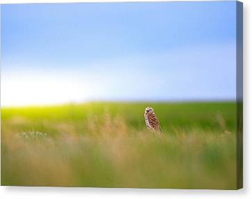 Canvas Print featuring the photograph Hunting Alone by Kadek Susanto