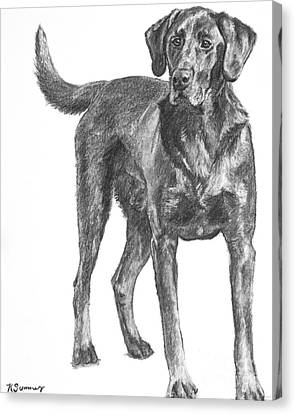Hunting Dog Labrador In Full Body Pose Canvas Print by Kate Sumners