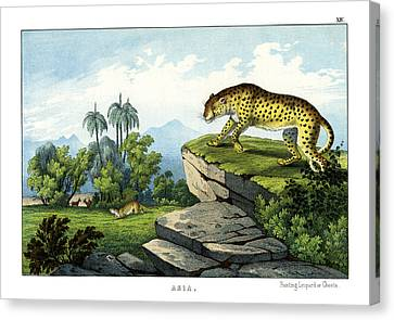 Hunting Leopard Canvas Print by Splendid Art Prints