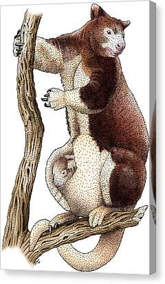 Huon Tree Kangaroo Canvas Print by Roger Hall