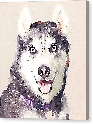 Husky Dog 1 Canvas Print by Yury Malkov